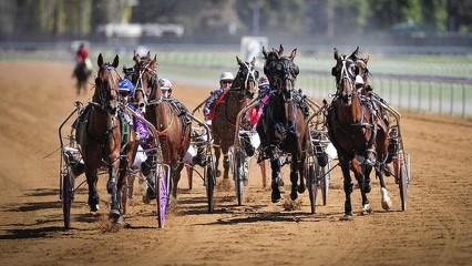 Real Life Harness Racing (2)