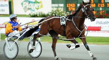 Real Life Harness Racing (3)