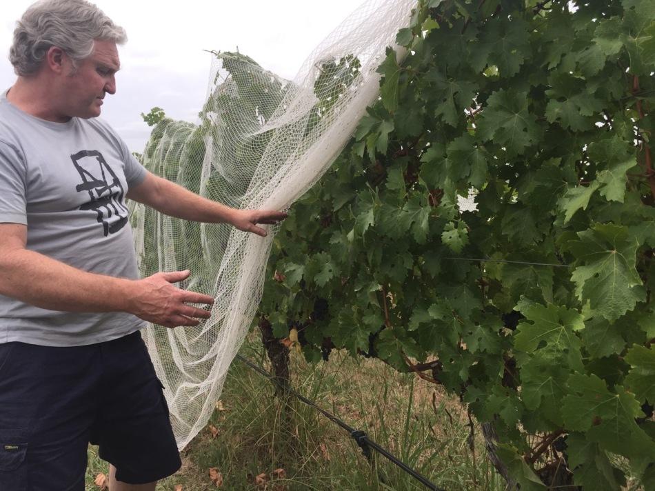 David Bicknell Chief Winemaker2